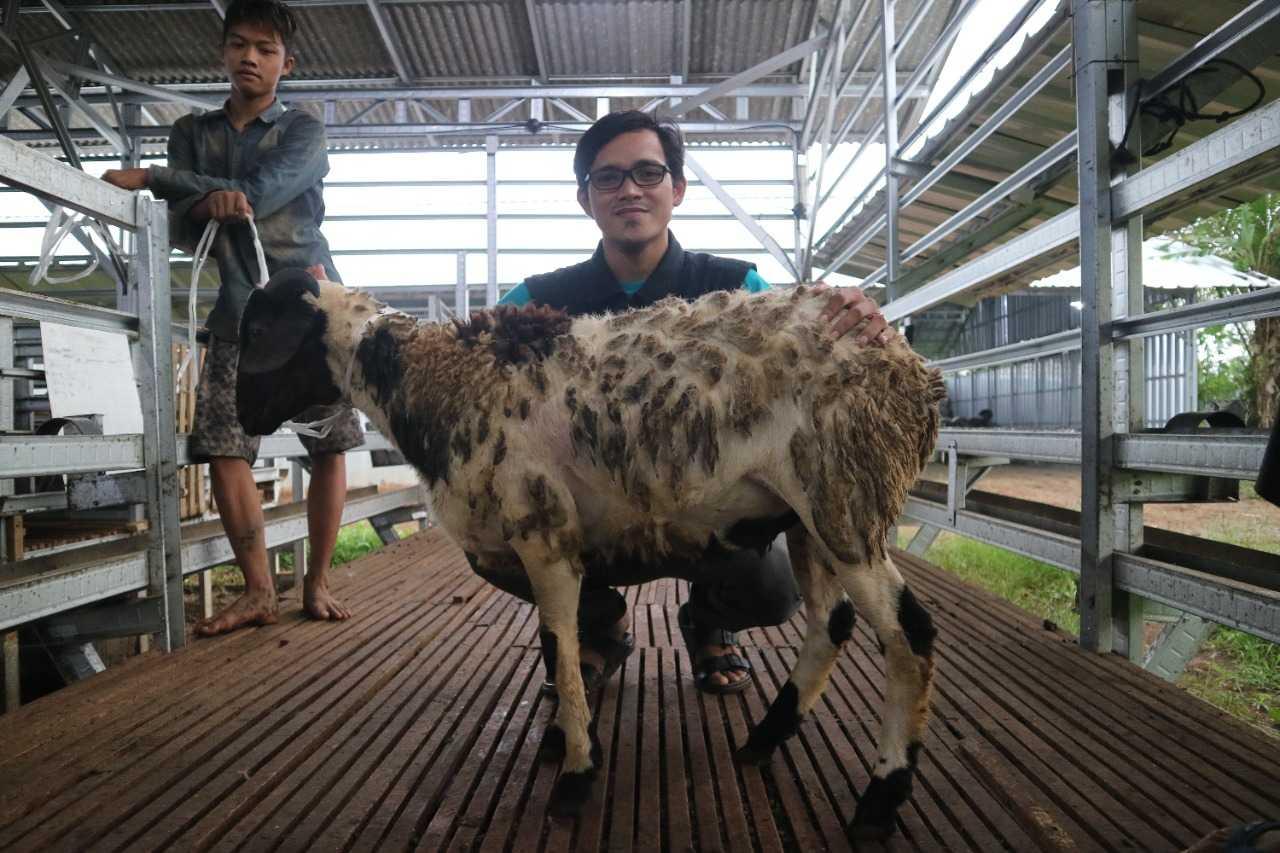 1 domba premium tebar hewan kurban dompet dhuafa banten disebarakan hingga pelosok banten