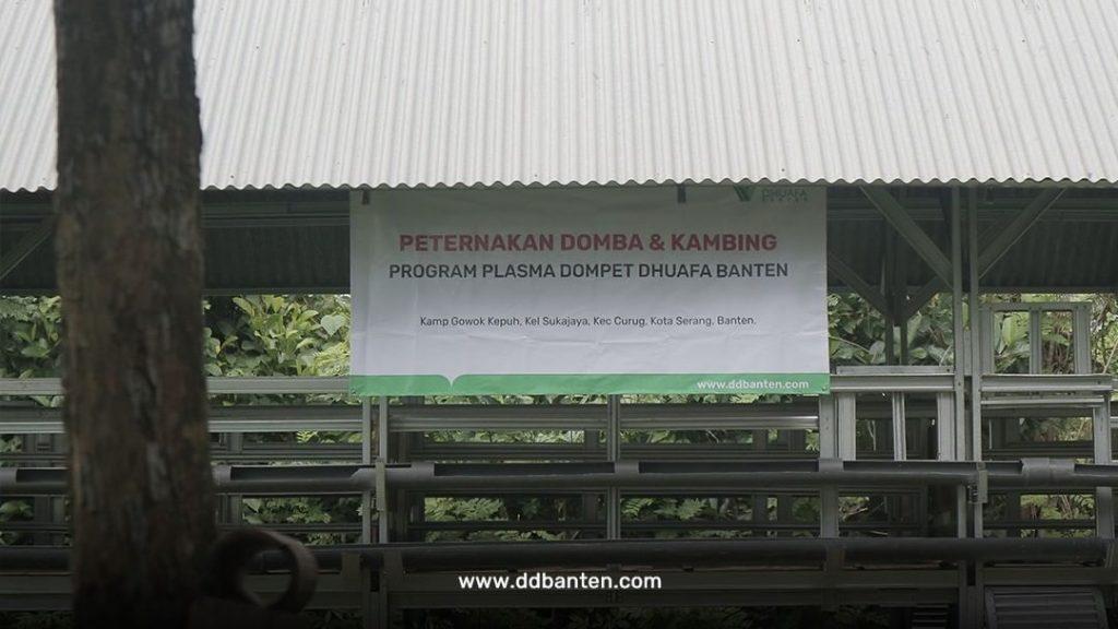Program Plasma peternakan domba dan kambing dompet dhuafa banten resmi berjalan